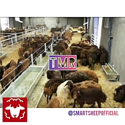 TMR لقمه های غذایی یکسان