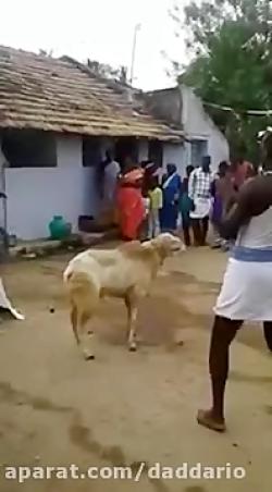 عاقبت مردی که میخواست یک بز را گردن بزند