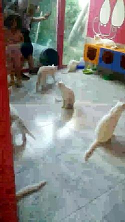 فیلمی از گربه های شهر وان در ترکیه