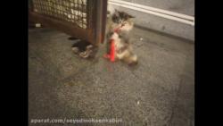 بازی بچه گربه ها!