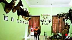 موزه حیات وحش هفت چنار