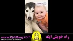 علاقه شدید سگ هاسکی به بچه
