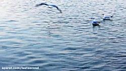 زاینده رود زیبا و پرندگان