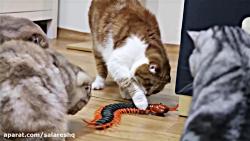 شکنجه حیوانات | ترساندن گربه های بیچاره با هزارپا ی وحشتناک غولپیکر HD