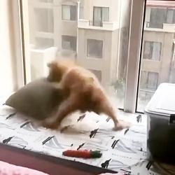 سگ چه کیفی میکنه با اهنگ