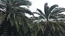 درختان نارگیل فوق العاده شگفت انگیز خانه میلیون ها پرنده وحشی