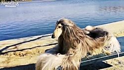 مو قشنگ ترین سگ در تمام دنیا !