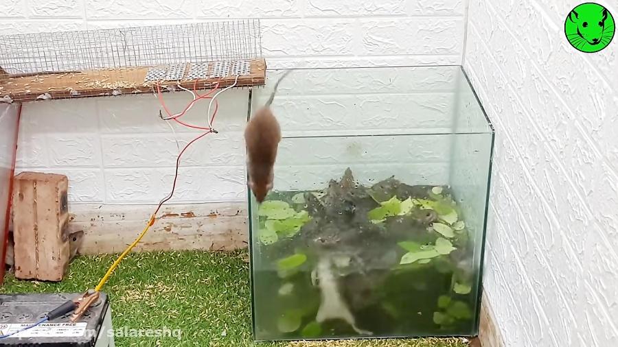 شکنجه موش | تله موش برقی جدید وحشتناک خارق العاده سال 2020 نوع 14 کیفیت FULL HD