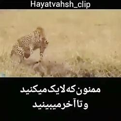 طبیعت  حیوانات چقدر زیب...