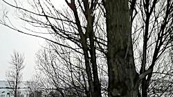 طبیعت زمستانی ایردموسی...