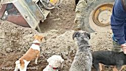 کشتن 700 موش با چندین سگ وحشی و راسوی آموزش دیده ترسناک 18+ با کیفیت SUPER HD
