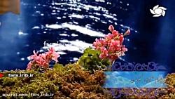 """ترانه قدیمی """" مگو با من """" با صدای آقای بهرام حصیری - شیراز"""
