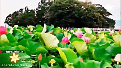 """کلیپ ترانه زیبای """" عمدا """" با صدای آقای سینا شعبان خانی - شیراز"""