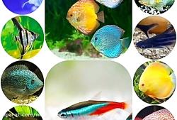 معرفی رایج ترین گونه های ماهی زینتی که دارای بازار خوبی هستند