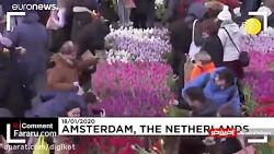 گل های رنگارنگ در روز ملی لاله در هلند