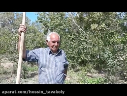 حسین توکلی