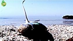 طبیعت ایران، حفظ منابع آبی از آلودگی ها- عاشقم بر همه عالم-14