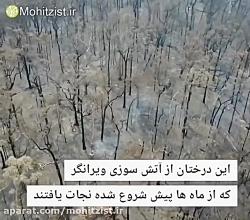 نجات درختان به جای ماند...