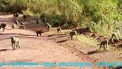 هازابه آخرین قبیله شکارچی تانزانیا