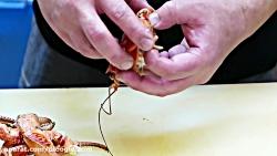 جاذبه های غذایی -  نارگیل خرچنگ کاری غذاهای دریایی اوکیناوا ژاپن