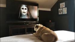 تماشا کردن فیلم ترسناک  THE NUN توسط سگ خونه !!!!!