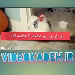 عطسه کردن مرغ    لایک یا...