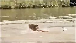 حمله حیوانات - نبرد حیوانات - شیر - ببر - پلنگ - مار - قسمت 1