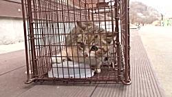 عملیات نجات گربه گرسنه و زخمی