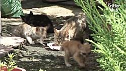کمک و درمان بچه گربه نابینا | دیدن مادر برای اولین بار