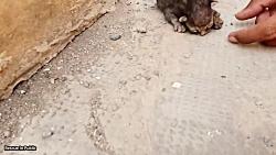 دنیای حیوانات | نجات زندگی بچه گربه تازه به دنیا آمده