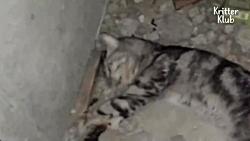 نجات زندگی بچه گربه ای که صاحبش او را گم کرده بود