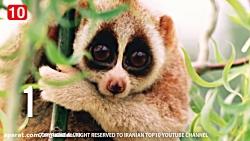 ۱۰ تا از حیوانات بامزه و جذاب جهان