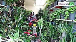 خرید گل و گیاه در تهران، پیشنهاد ویژه روز مادر و روز عشق!