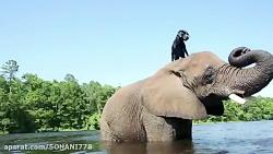 دوستی حیوانات باهم