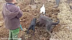 شکنجه موش های بیچاره با وحشی ترین حیوانات در مزرعه با کیفیت SUPER HD