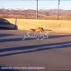 گرفتن توله شیر فراری از خودرو در آزادراه قزوین!!!
