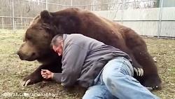 اینم خرس ولنتاین من