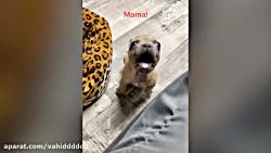 حیوانات بامزه 18