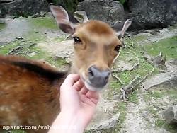 حیوانات بامزه 23