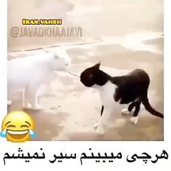 کلیپ خنده دار حیوانات