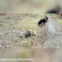 میکس باحال حیوانات