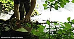 آشپزی در طبیعت -  برگر ب...