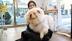 خانم آرایشگر و سگ پشمالو بازیگوش و بداخلاق