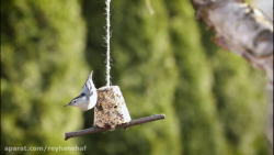 آموزش کیک پرنده برای پرنده گان جهت تغذیه