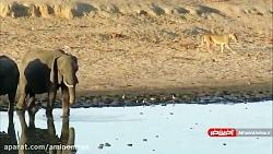 همزیستی زیبای حیوانات در کنار یک برکه در صحرای آفریقا