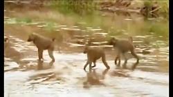 مستندحیات وحش فیل های بیابانی