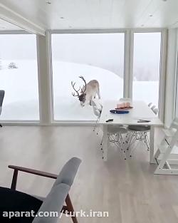 کلیپ زیبا از طبیعت برفی