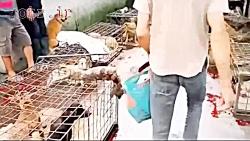 بازار گوشت حیوانات