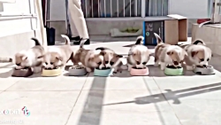 بچه حیوانات سوپر بامزه و خنده دار - قسمت 7 - Cute Baby Animals