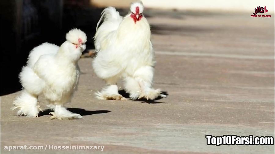 دانستنی ها | 10 حیوان عجیب که نمیدونستید